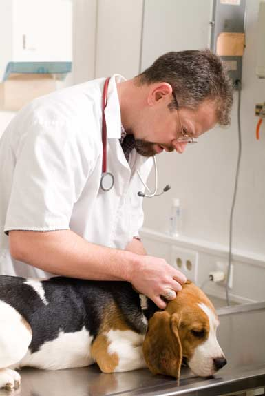 Vet-and-Dog