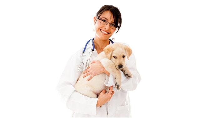 bigstock-Vet-holding-a-little-puppy-dog