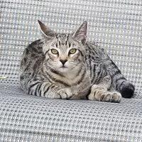 Lost Cat in San Antonio, TX