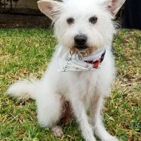 OAKLEY is available for adoption here in Los Angeles.