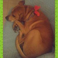 Lost Dog in Corpus Christi, TX
